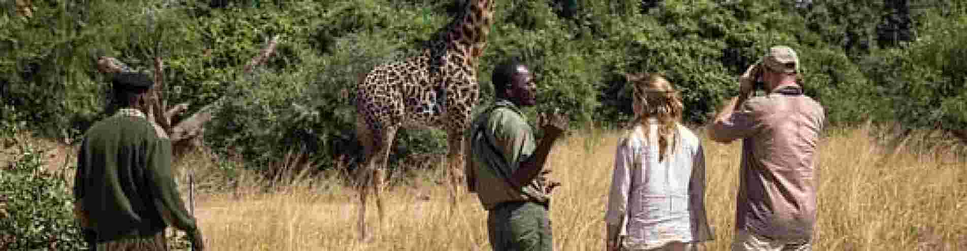 SOUTH LUANGWA NATIONAL PARK header image