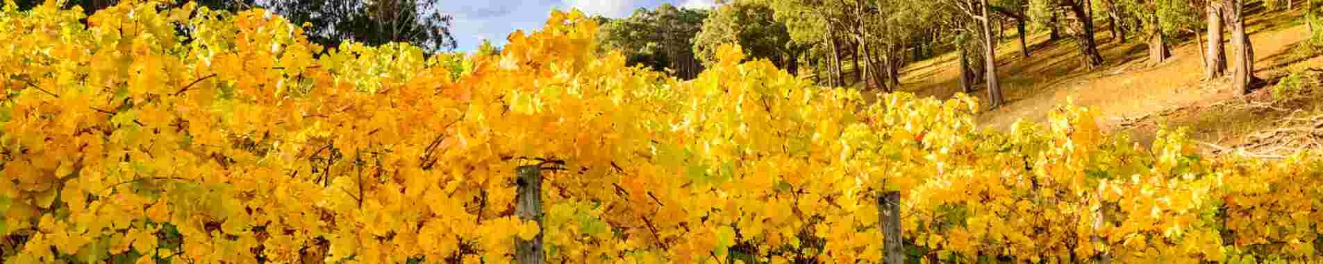Adelaide / Wine Regions header image