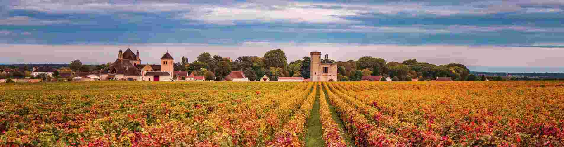 Are you a lover of rare wine, dinners, Burgundy or Bordeaux? header image