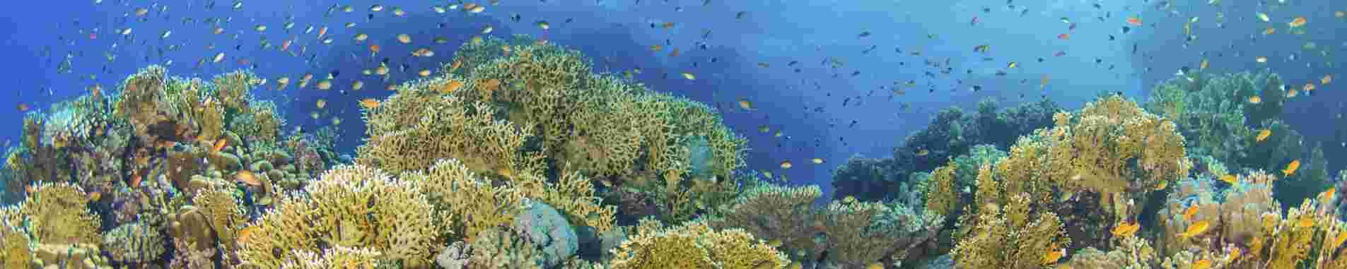 Great Barrier Reef (Northern) header image