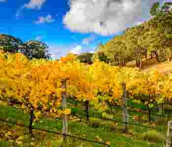 Adelaide / Wine Regions