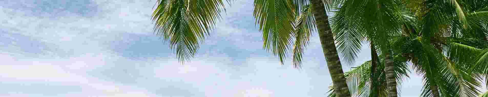 Island Escapes header image