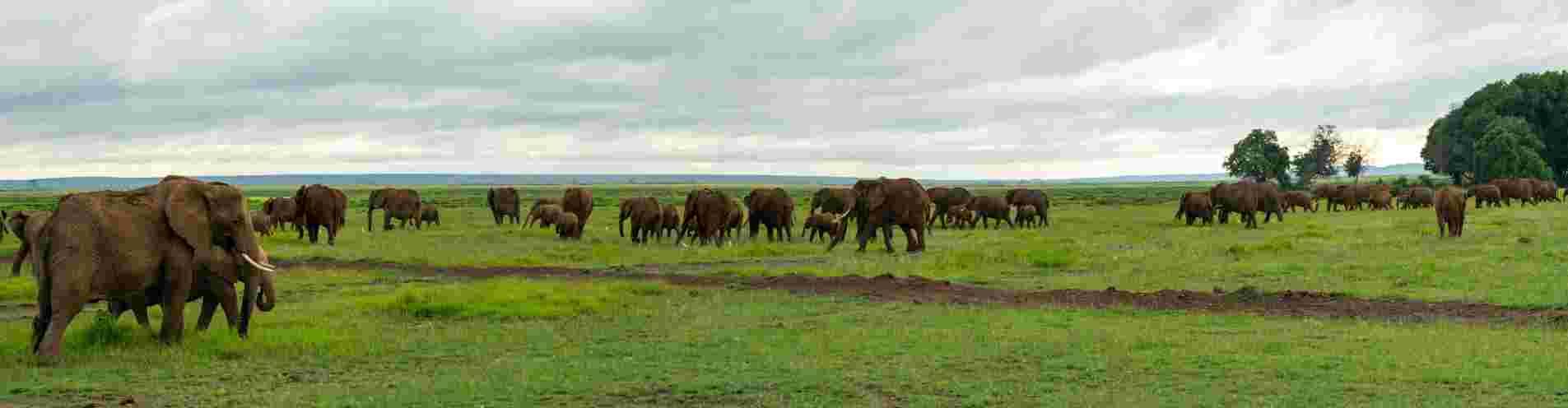 Kenya header image