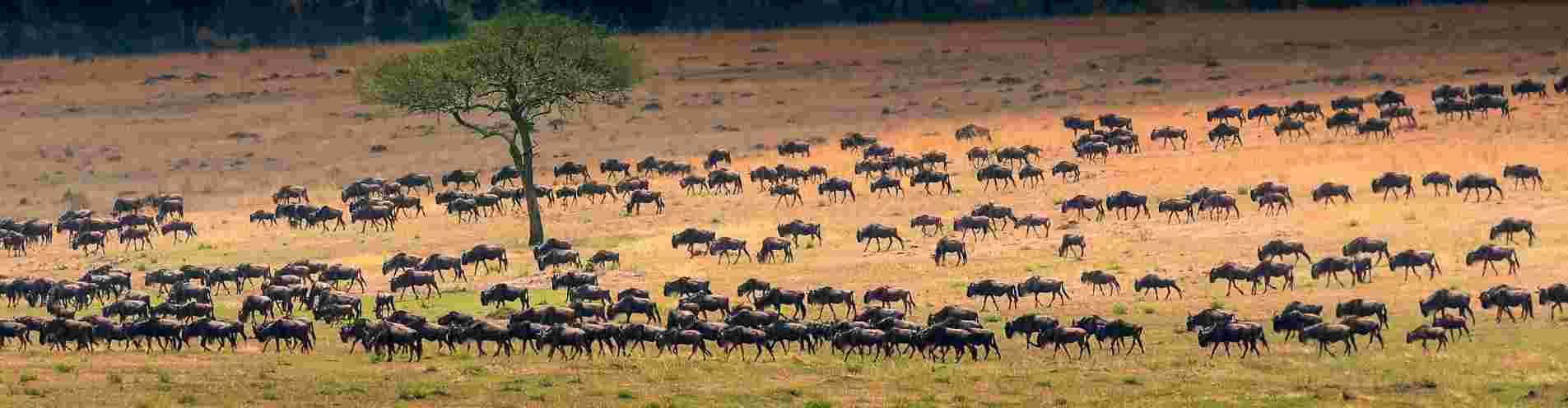 Tanzania header image